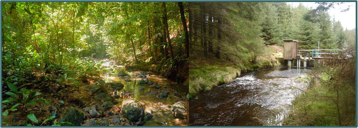 left: Baru rainforest watershed, Malaysian Borneo (photo: W. Tych Oct 2006) & right: Hafren plantation watershed, upland Wales (photo: D. Norris  Apr 2012